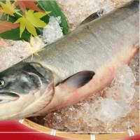秋です。鮭の季節です。醤油はらこもできたてです